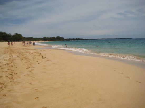 Maui beaches nude Nude Photos 50