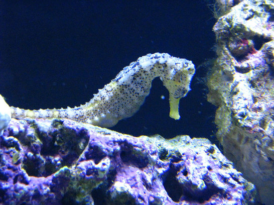 Discovery World : Seahorse