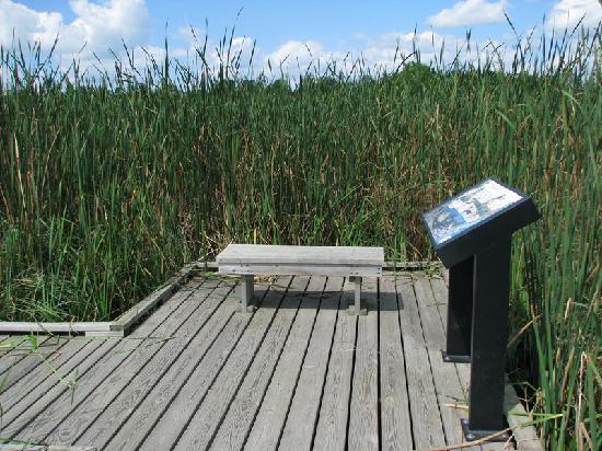 Kohler-Andrae State Park : Boardwalk on the marsh