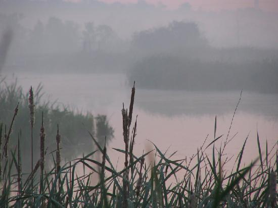 Kohler-Andrae State Park: Misty morning on the marsh