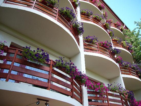 Little Texas Hotel : Flowers everywhere
