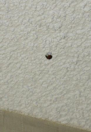 Saint Charles, IL: One of the many beetle like bugs in my room