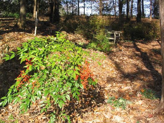 Botanic Garden In October November Picture Of Huntsville Botanical Garden Huntsville