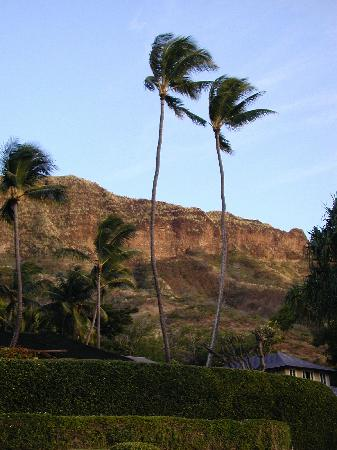 Diamond Head Bed And Breakfast: out the front door of the B&B