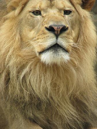 Milwaukee County Zoo: King of the jungle