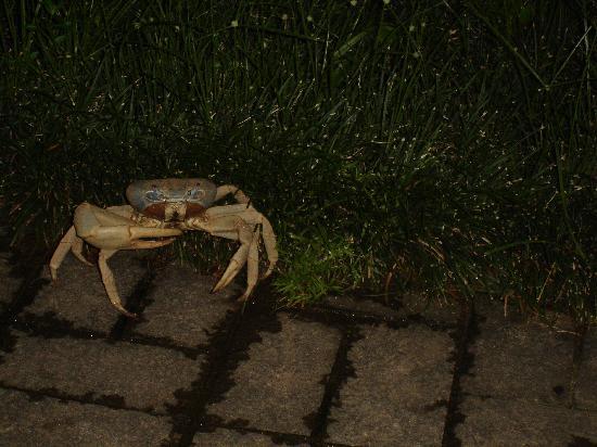 Pousada Tropicana: l'un des crabes de la Pousada...