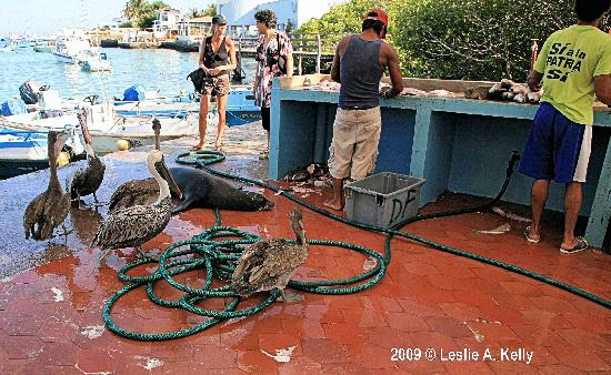 Fish market near hotel silberstein seal pelicans picture for Fish cleaning station near me
