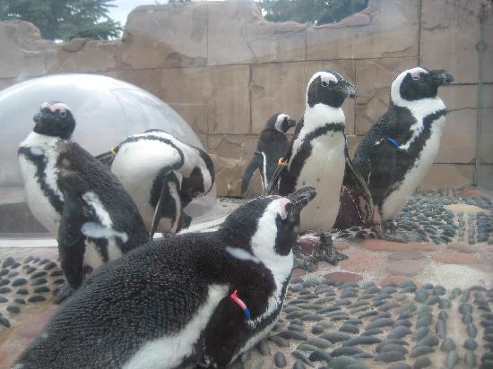 Long Island Aquarium: Penguin Exhibit