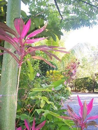 Tranquilseas Eco Lodge and Dive Center: Gardens