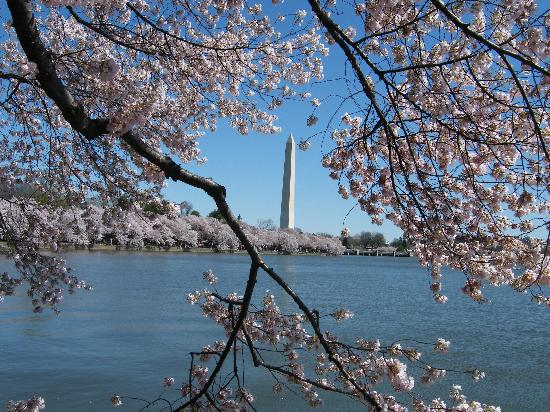 Washington DC, Distrito de Columbia: Cherry Blossoms