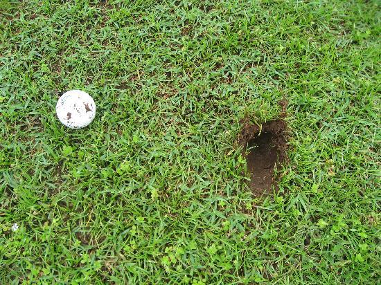 Hornbill Golf and Jungle Club Course : Plug Ball on Fairway