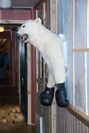 Mary-Ann's Polarrigg : Bear
