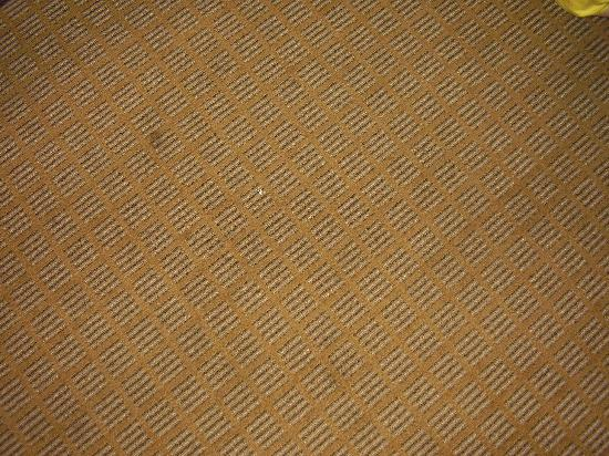 Americas Best Value Astoria Inn and Suites: The Carpets
