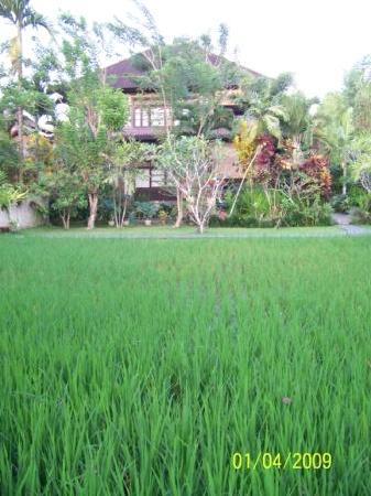 Alam Shanti: Arrozales Al Lado De La habitación Saraswati Rool