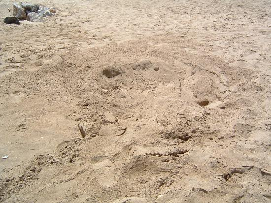 Shangri-La Al Husn Resort & Spa : turtle nest from previous night