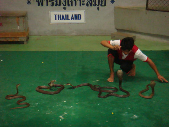 Samui Snake Farm: Kissing the cobras