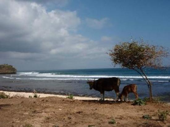 A bucolic scene at Balangan Beach