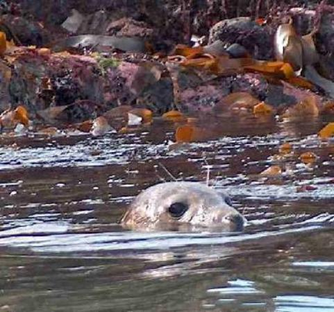 Seal checking out the Advocate Harbour beach