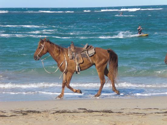 Extreme Hotel Horse Running Kite Beach In Dominican Republic