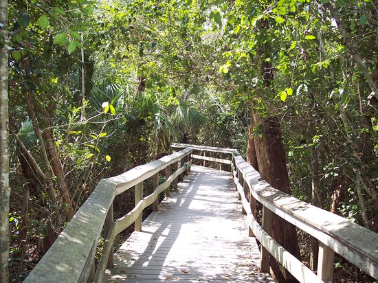 Everglades National Park, Φλόριντα: Mahogany Hammock trail
