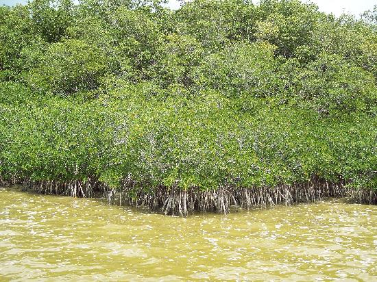 West Lake Trail : View of mangroves from boardwalk