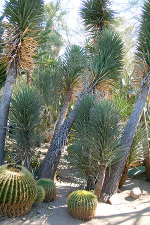 Moorten Botanical Garden (Palm Springs)   All You Need To Know Before You  Go (with Photos)   TripAdvisor