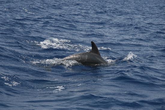 Dolphin Boat Safari: dolphin