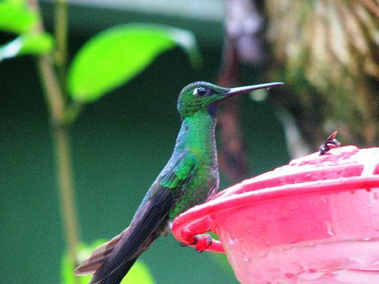 Birdwatcher's House Hostal : hummingbird