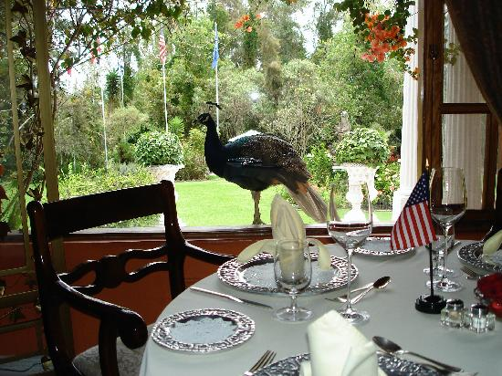 La Mirage Garden Hotel & Spa: The dining room with peacock looking in