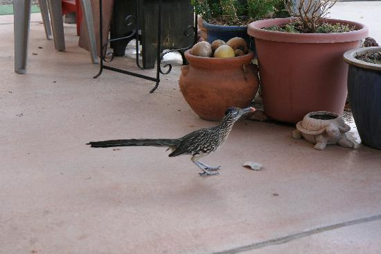 Chocolate Turtle Bed and Breakfast: A Friendly Road Runner
