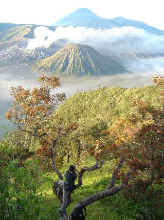 Sukapura, Indonesia: Bromo Sunrise at Penajakan