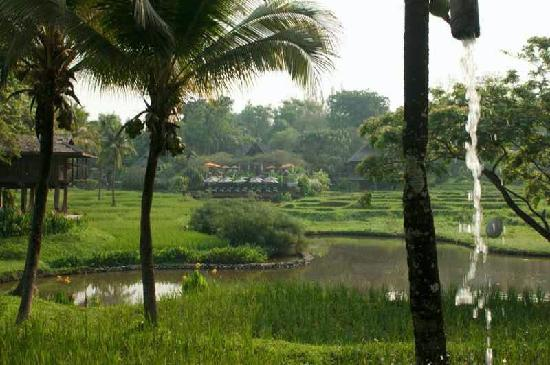 Lana Thai Villa: view of the rice fields of foru seasons resort