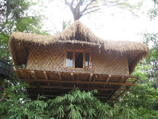 Wayanad Blooms: The Tree Hut