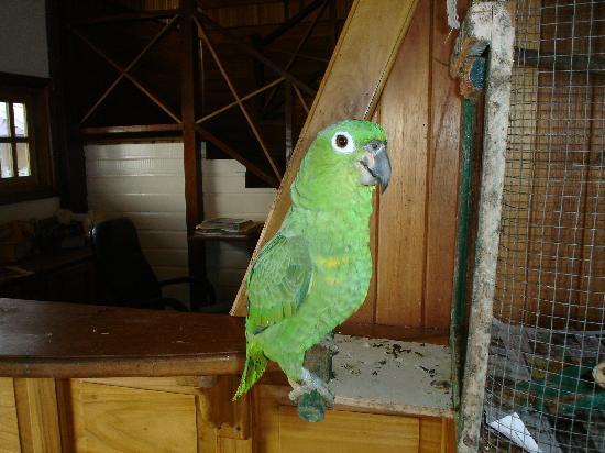 Hotel Olas: Parrot at lobby