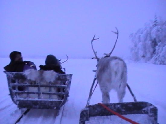 Levi Hotel Spa: Watch out for the charging reindeer
