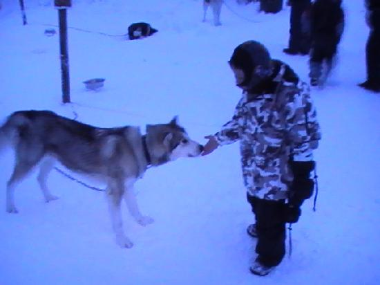 Levi Hotel Spa: Husky Safari before Reindeer Safari - Brilliant