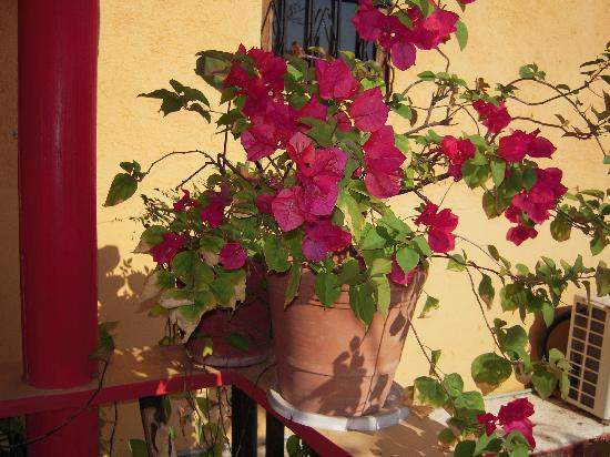 Casa Adriana: Lucy Hernandez and staff keep beautiful plants and garden all around the hotel.  This was one of