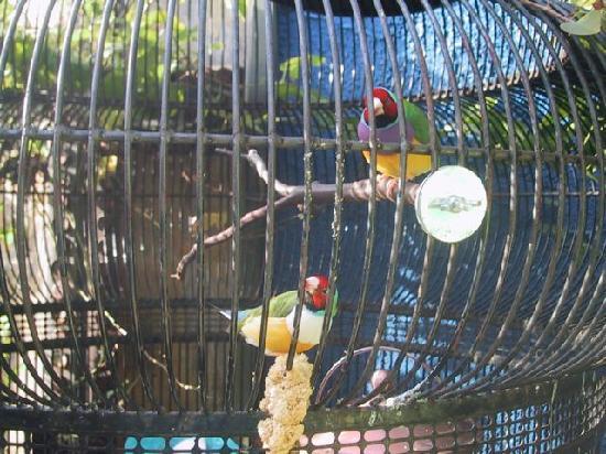 Vintage Sol: Bird Cage