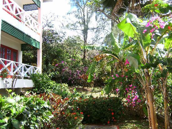 Manta Lodge: garden