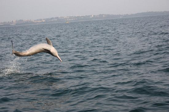 Casa Candolim: Dolphin showing off