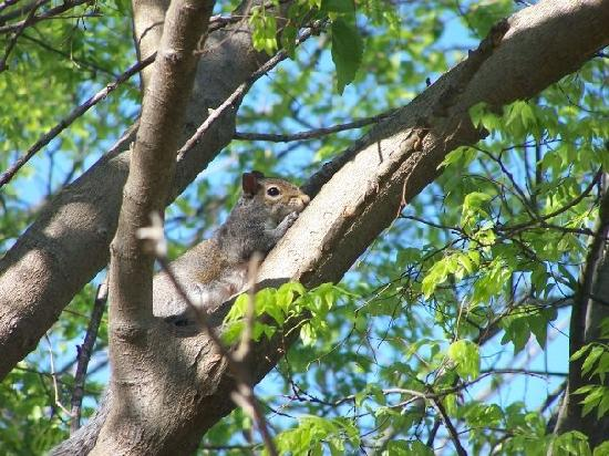 Gables: a visitor to the tree near our balcony