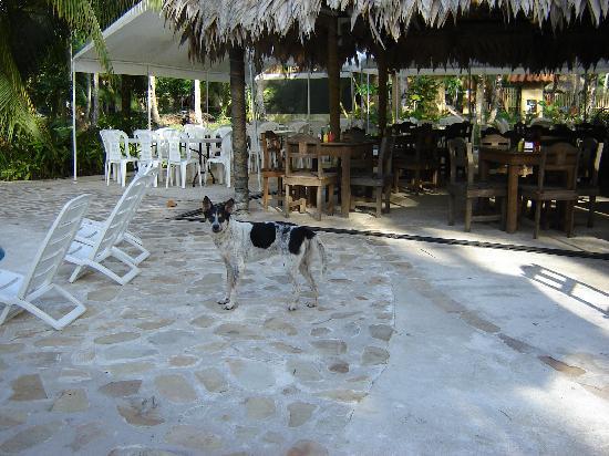 Hotel Playa Westfalia: Hotel doggie by the dining area