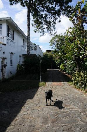 Raya Vida Villa: Outside