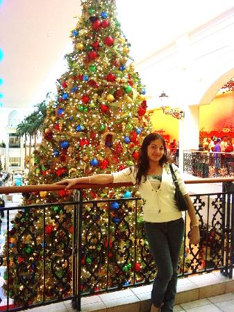 At Plaza Las Americas in front of the giant tree in Christmas!