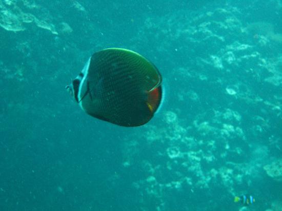 ไอส์แลนด์ ไดเวอส์: Marine life at Bida Nok