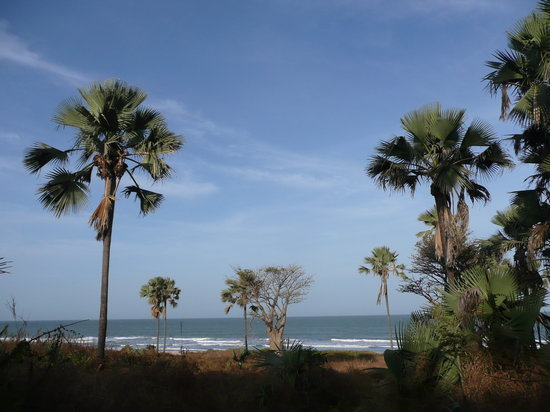 The 10 Best Things to Do in Kololi, Gambia