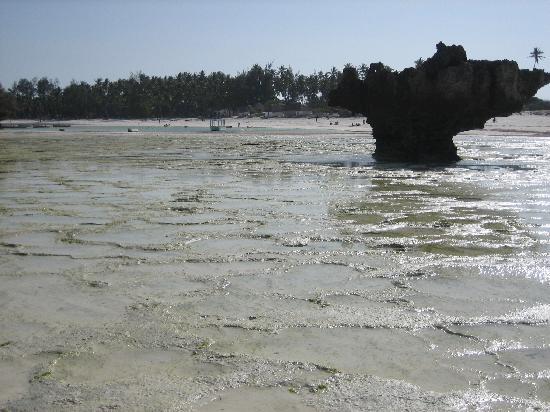Crystal Bay Resort: bassa marea