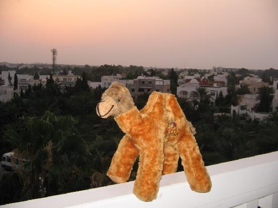 Hotel Kanta : camel