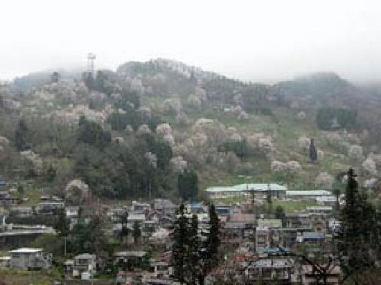 小川村の桜は4月中旬から下旬が見ごろです。あまり知られていない立屋地区の桜はみごとです。