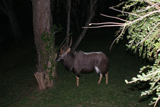 Amakhosi Safari Lodge: house guest
